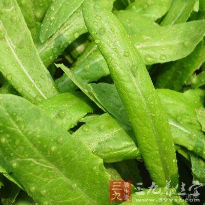 油麦菜的营养价值,功效与作用,油麦菜的做法大全
